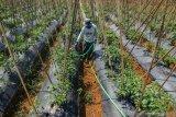 Fisipol UMP dan PKS canangkan gerakan menanam pohon di Kalteng