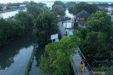 Pelestarian hutan mangrove stabilkan kondisi lingkungan