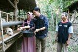 Kisah Anisa Rahma dan Dito urus kambing Global Qurban dari lumbung ternak