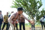 Pemkab Batang rintis agrowisata jeruk