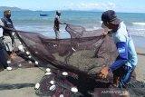 Nelayan mengumpulkan ikan teri yang terjaring pukat darat di perairan Kampung Jawa, Banda Aceh, Aceh, Selasa (16/7/2019). Nelayan tradisional yang mengoperasikan pukat darat di perairan pantai itu menyatakan sejak dua hari terakhir mereka kebanjiran hasil tangkapan ikan teri yang dipasarkan seharga Rp150.000 hingga 200.000 perkeranjang. (Antara Aceh/Ampelsa)