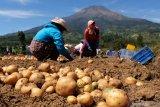 Antisipasi cadangan pangan, Bupati Temanggung imbau petani perbanyak tanaman pangan