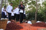 Menteri Badan Usaha Milik Negara (BUMN) Rini M. Soemarno (kanan), didampingi Direktur Utama PT Perkebunan Nusantara (PTPN) XII Cholidi (kiri), Direktur Utama PTPN III Dolly Pulungan (kedua kanan), melihat sortasi kopi di Kebun Kalisat, Kecamatan Ijen, Bondowoso, Jawa Timur, Selasa (16/7/2019). Menteri BUMN mendorong PTPN XII meningkatkan produksi kopi Arabica karena dimintai pasar luar negeri seperti Amerika Serikat, negara di Eropa, dan Arab Saudi. Antara Jatim/Seno/zk