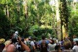Sejumlah wisatawan mancanegara memantau pergerakan Orangutan (pongo pygmaeus) yang sedang bergelantungan di pohon di Semenggoh Wildlife Centre di Kuching, Sarawak, Selasa (16/7/2019). Semenggoh Wildlife Centre yang menjadi pusat rehabilitasi dan perlindungan Orangutan sejak 1975 tersebut menjadi salah satu destinasi wisata Sarawak yang dapat dikunjungi wisatawan domestik dan mancanegara. ANTARA FOTO/Jessica Helena WuysangANTARA FOTO/JESSICA HELENA WUYSANG (ANTARA FOTO/JESSICA HELENA WUYSANG)