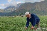 Tiga provinsi berminat mengembangkan bawang putih Lombok