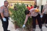 Polisi menangkap seorang petani  karena menanam ganja