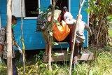 Seorang wanita  ditemukan meninggal di kebun karet
