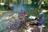 Petani jengkol Maringgai dapat berkah dari musim kemarau