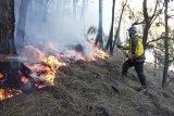 Kebakaran lereng Gunung Arjuno dapat dipadamkan