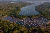Alih fungsi lahan hutan bakau