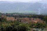 Pembukaan lahan baru untuk pemukiman dan perkebunan di kawasan hutan Geumpang, Pidie, Aceh, Minggu (28/7/2019). Pembukaan kawasan hutan untuk pemukiman dan lahan perkebunan terus meningkat di Provinsi Aceh dan data hasil pantauan Yayasan Hutan Alam dan Lingkungan Aceh (HAKA) penggundulan hutan pada 2018 mencapai 15.071 hektar. (Antara Aceh / Irwansyah Putra)