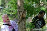 Petugas Balai Konservasi Sumber Daya Alam (BKSDA) Aceh melepasliarkan primata Kukang Sumatra (Nycticebus coucang) di kawasan hutan Aceh Besar, Aceh, Kamis (1/8/2019). BKSDA Aceh melepasliarkan dua ekor satwa langka dan lindungi yakni Kukang sumatra dan elang laut dada putih (haliaeetus leucogaster) kehabitatnya setelah mendapat perawatan dan rehabilitasi di kandang lembaga konservasi tersebut. (Antara Aceh / Irwansyah Putra)