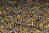 Fans Kolombia tertahan di Argentina akibat COVID-19