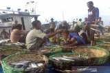 Pekerja memilah ikan hasil tangkapan nelayam di Tempat Pendaratan Ikan (TPl) Lampulo, Banda Aceh, Aceh (2/8/2019). Hasil tangkapan ikan tersebut selain untuk memenuhi permintaan pasar lokal juga ini dikirim ke luar daerah terutama untuk pasar Medan, Sumatera Utara. (Antara Aceh /Muhammad Rizki)