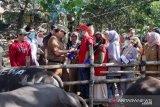 Makassar kerahkan 166 nakes periksa hewan qurban