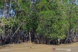 Menteri LHK usulkan mangrove dibawa ke KTT Aksi Iklim PBB di New York