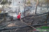 People affected by forest fires should avoid outdoor activities