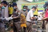 Balai Karantina Pertanian Jayapura musnahkan hewan dan tumbuhan selundupan