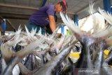 Pedagang menata ikan dagangannya di Tempat Pendaratan Ikan Desa Ujong Baroh, Kecamatan Johan Pahlawan, Aceh Barat, Aceh, Jumat (9/8/2019). Menjelang perayaan tradisi meugang di Provinsi Aceh, harga berbagai jenis ikan segar rata-rata naik 20 sampai 30 persen dari hari biasanya menyusul tingginya permintaan sedangkan persedian terbatas akibat nelayan sudah libur melaut. (Antara Aceh Aceh/Syifa Yulinnas)