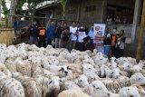 ACT DIY sembelih 250 kambing kurban di Kulon Progo
