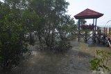 Pengunjung menikmati wisata hutan mangrove saat mengisi libur idul adha 1440 H di Pantai Talang Siring, Pamekasan, Jawa Timur, Sabtu (10/8/2019). Destinasi wisata tersebut menjadi pilihan utama warga di kabupaten itu untuk mengisi libur nasional dan keagamaan. Antara Jatim/Saiful Bahri/zk.