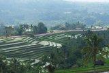 Kain merah putih terbentang di tengah sawah untuk memperingati HUT ke-74 Proklamasi Kemerdekaan Republik Indonesia di obyek wisata Jatiluwih, Tabanan, Bali, Rabu (14/8/2019). Pembentangan kain merah putih sepanjang 1.945 meter tersebut melibatkan 1.700 personel Polri, 8 tokoh agama dan 45 personel TNI sekaligus memecahkan rekor kain merah putih terpanjang serta tercatat dalam MURI. ANTARA FOTO/Nyoman Hendra Wibowo/nym.
