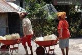 22.082 warga Flores Timur merasakan dampak kekeringan