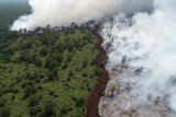 Kebakaran lahan dekati konsesi Sinar Mas