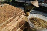 Petani menata tembakau yang baru saja keluar dari mesin perajangan untuk dijemur di Desa Semen, Kediri, Jawa Timur, Rabu (21/8/2019). Petani di daerah penghasil rokok tersebut mengaku diuntungkan dengan harga tembaku kering yang stabil yakni seharga Rp35 ribu per kilogram. Antara Jatim/Prasetia Fauzani/zk.