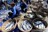 Nelayan membongkar muat ikan tongkol hasil tangkapan di Pelabuhan Pendaratan Ikan (PPI) Samudera, Banda Aceh, Aceh, Kamis (22/8/2019). Sejak sepekan terakhir tangkapan nelayan di ujung barat pulau Sumatera mengalami penurunan akibat angin kencang gelombang tinggi hingga harga jual masih mahal Rp450.000 hingga Rp500.000 per keranjang. Antara Aceh / Irwansyah Putra.