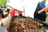 Pengunjung menikmati madu kelulut langsung di tempat budidaya madu kalulut di Taman Hutan Raya Mandiangin, Kabupaten Banjar, Kalimantan Selatan, Minggu (25/8/2019).Taman hutan raya (Tahura) Mandiangan menawarkan berbagai macam wisata alam seperti pemandangan indah, budidaya madu kalulut,flora dan fauna, dan lokasi swafoto.Foto Antaranews Kalsel/Bayu Pratama S.
