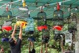 BKSDA W Sumatra asked chirping bird lovers to register pet birds immediately