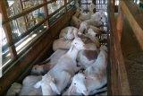 Abita Farm, contoh sukses PWMP Polbangtan YoMa