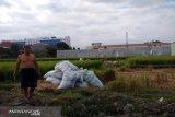 Sleman mengupayakan lahan pertanian kering di Prambanan untuk penuhi LP2B