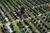 Pokdarwis Tulungagung kembangkan agrostroberi rintisan berbasis desa