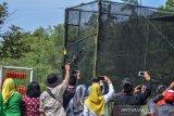 Sejumlah pengunjung mengabadikan seekor Elang Ular Bido (Spilornis cheela) saat dilepasliarkan ke habitatnya di Pusat Konservasi Elang Kamojang (PKEK) Kabupaten Garut, Jawa Barat, Kamis (29/8/2019). Sejak tahun 2015 PKEK telah melepasliarkan 50 ekor elang diseluruh wilayah Indonesia ke habitat asalnya, sedangakan 37 ekor elang dilepaskan dikawasan Kamojang dengan jumlah yang masih mejalani rehabilitas saat ini 122 ekor elang. ANTARA JABAR/Adeng Bustomi/agr