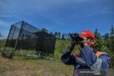 Petugas Pusat Konservasi Elang Kamojang (PKEK) mengamati seekor Elang Ular Bido (Spilornis cheela) usai dilepasliarkan ke habitatnya dikawasan PKEK, Kabupaten Garut, Jawa Barat, Kamis (29/8/2019). Sejak tahun 2015 PKEK telah melepasliarkan 50 ekor elang diseluruh wilayah Indonesia ke habitat asalnya, sedangakan 37 ekor elang dilepaskan dikawasan Kamojang dengan jumlah yang masih mejalani rehabilitas saat ini 122 ekor elang. ANTARA JABAR/Adeng Bustomi/agr