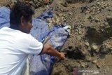 BPCB temukan arang gabah di Liyangan, diduga lumbung padi