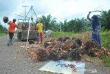 Pemkab Muaraenim targetkan  peremajaan kebun sawit seluas 5.000 Ha