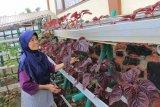 Dinas Sosial Tanggerang berikan kegiatan berkebun dan bermain angklung untuk melatih motorik lansia