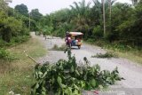 Karena tak kunjung diaspal, warga tanam pohon di badan jalan