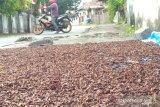 Harga cengkih di Manado stagnan