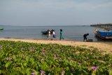 Mahasiswa Untan bantu promosikan wisata Temajuk lewat medsos