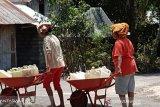 Warga Kabupaten Donggala mulai kesulitan air bersih akibat kemarau
