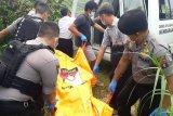 Seorang peternak babi di Palangka Raya ditemukan tewas membusuk