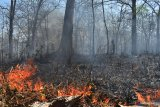 Kobaran api membakar hutan di kawasan hutan jati Saradan, Kabupaten Madiun, Jawa Timur, Kamis (12/9/2019). Pada musim kemarau di kawasan tersebut sering terjadi kebakaran yang  belum diketahui penyebabnya. Antara Jatim/Siswowidodo/zk.