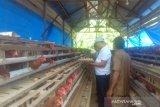 934 KK Miskin di Konawe Utara Peroleh Bantuan Bibit Ayam
