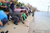 Peringatan World Cleanup Day 2019 diwarnai aksi pelepasan tukik oleh Gubernur NTB