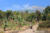 Hutan lerang Gunung Sumbing di Temanggung terbakar