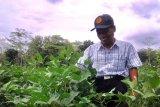 Harga jual tinggi, kedelai organik potensial dikembangkan